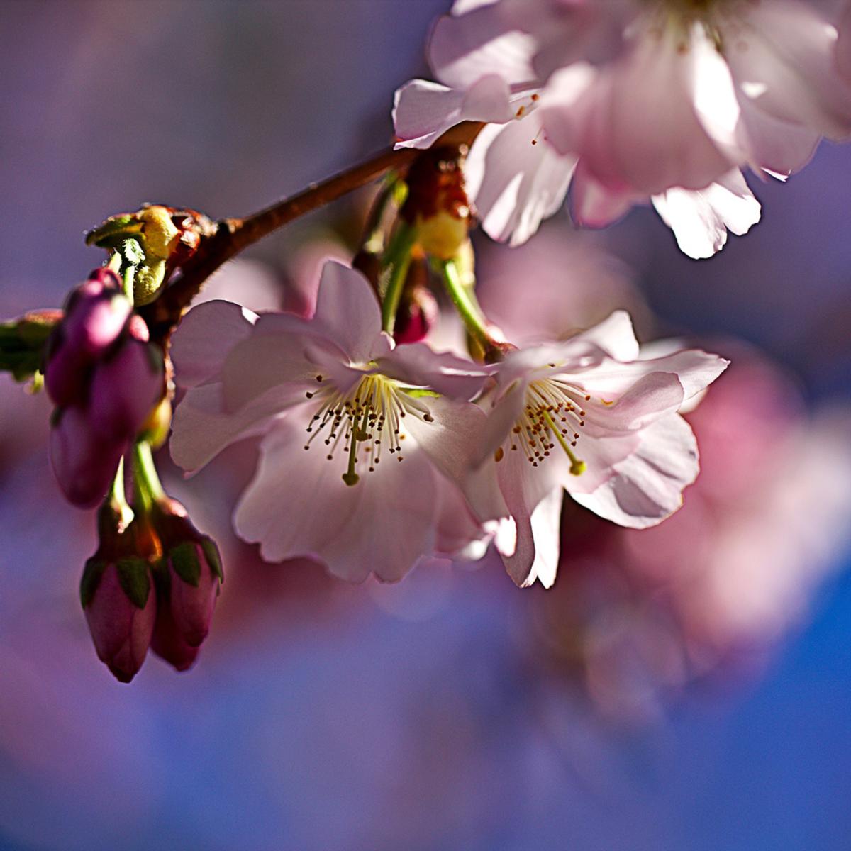 悪い 見る 会 何 が 桜 を
